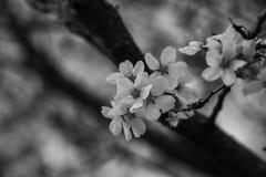 Frühling in B u. in W lizenzfreies stockbild