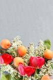 Frühling blüht, Aprikosen auf einem konkreten Hintergrund Stockfotografie