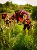 Frühling blüht das Blühen in Poleg-Strom nahe dem Mittelmeers Lizenzfreie Stockfotografie