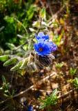 Frühling blüht das Blühen in Poleg-Strom nahe dem Mittelmeers Stockbilder