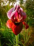 Frühling blüht das Blühen in Poleg-Strom nahe dem Mittelmeers Stockbild