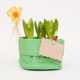 Frühling blüht in einem Topf mit einer netten Dekoration Stockfotos