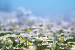 Frühling blüht grünen Hintergrund Stockbilder