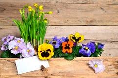 Frühling blüht hölzernen Hintergrund Stockbilder