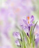 Frühling blüht Hintergrund Lizenzfreies Stockfoto