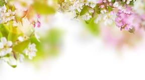 Frühling blüht Hintergrund stockbilder