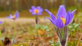Frühling blüht Kammer stock footage