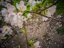 Frühling blüht Nahaufnahmehintergrund Lizenzfreie Stockbilder