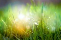 Frühling blüht Nahaufnahmehintergrund Stockfotos