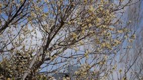 Frühling blüht nahe Bürogebäuden stock video footage