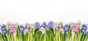 Frühling blüht Panorama mit frischen bunten Hyazinthen auf weißem hölzernem Hintergrund, Draufsicht lizenzfreie stockfotografie
