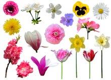 Frühling blüht Sammlung lizenzfreie stockfotografie