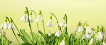 Frühling blüht Vorsatz lizenzfreie stockbilder