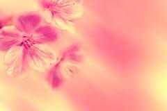 Frühling blüht Weinlese-Bild Stockbilder