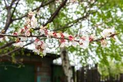 Frühling blühte Bäume Stockfotos