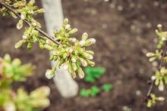 Frühling blühte Bäume Stockbilder