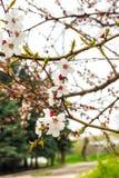 Frühling blühte Bäume Lizenzfreies Stockbild