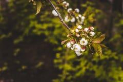 Frühling blühte Bäume Stockfotografie