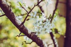 Frühling blühte Bäume Lizenzfreie Stockfotos