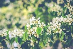 Frühling blühte Bäume Stockbild
