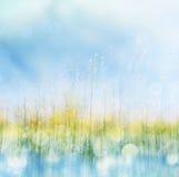 Frühling Blume und Bokeh lizenzfreie stockbilder