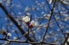 Frühling Blumen auf einem Baumast Schönes Bild der Natur lizenzfreies stockbild