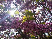Frühling, Blumen, Wärme, Gelendzhik Lizenzfreies Stockbild