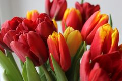 Frühling, Blumenstrauß von Tulpen Blumenauslegung? Hintergrund, Hintergrund, Auslegung der Abbildung Lizenzfreie Stockfotografie