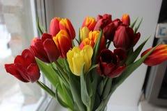 Frühling, Blumenstrauß von Tulpen Blumenauslegung? Hintergrund, Hintergrund, Auslegung der Abbildung Lizenzfreie Stockbilder