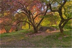 Frühling in Central Park lizenzfreie stockfotografie