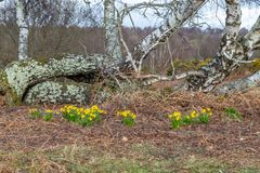 Frühling an Chailey-Common in Sussex lizenzfreie stockbilder