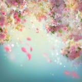Frühling Cherry Blossom Background Lizenzfreies Stockfoto