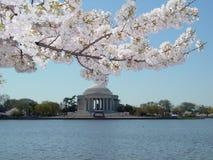 Frühling in DC Stockfotos
