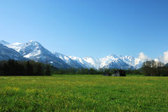 Frühling in den Alpen. Stockfotos