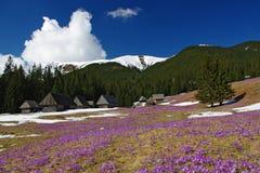 Frühling in den Bergen Stockfotos