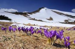Frühling in den Bergen Lizenzfreies Stockfoto