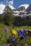 Frühling in den Dolomit stockfotografie