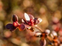 Frühling in den kleinen roten Blumenblättern lizenzfreie stockbilder
