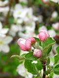 Frühling in der Blüte Lizenzfreie Stockfotos