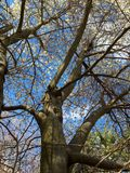 Frühling in der Blüte Stockbild