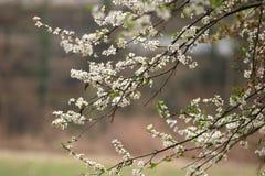 Frühling in der Blüte stockfotos
