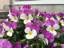 Frühling in der Blume Lizenzfreie Stockfotografie