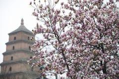 Frühling in der Dayan-Pagoden-szenischen Stelle, Xi'an-Stadt, Shaanxi-Provinz, China stockbild