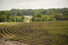 Frühling, der die Ernte beginnt Reihen bewirtschaftet stockbilder
