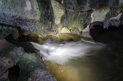 Frühling in der Höhle Stockbild