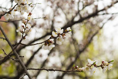 Frühling in der Luft stockfotografie