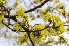 Frühling in der Luft lizenzfreie stockbilder