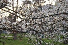 Frühling in der Luft lizenzfreies stockbild