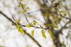 Frühling in der Luft lizenzfreie stockfotografie
