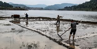 Frühling, der in shengzhong See in Sichuan, Porzellan pflügt stockfoto